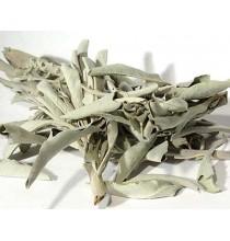 Szałwia biała - Ameryka (luzem 50g)