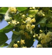 KWIAT LIPY suszony - zioła z czystych terenów Kurpi, ręcznie zbierane (50g)