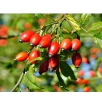 OWOC DZIKIEJ RÓŻY suszony - zioła z czystych terenów Kurpi, ręcznie zbierane (50g)