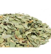 Eukaliptus - liście (luzem 10g)