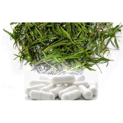 BAMBUS - ekstrakt 70% krzemionki, NATURALNY KRZEM - kapsułki (100 szt) - VEGAN