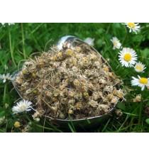 STOKROTKA kwiat suszony (50g)