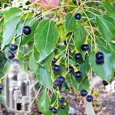 Drzewo Ho (olejek eteryczny)