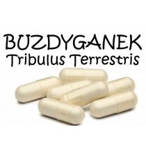BUZDYGANEK ZIEMNY (Tribulus Terrestris) - kapsułki (100 szt)