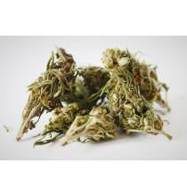 Herbata z KWIATÓW KONOPI Siewnych (suszona naturalnie) 2-4% CBDA+CBD (20g)